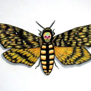Death's Head Sugar Moth